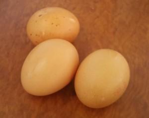 Cabbages Stir-Fry - Eggs