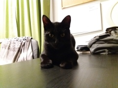 Kamino The Cat