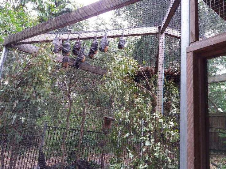 Brisbane1 Bats